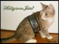 Боевой кот!
